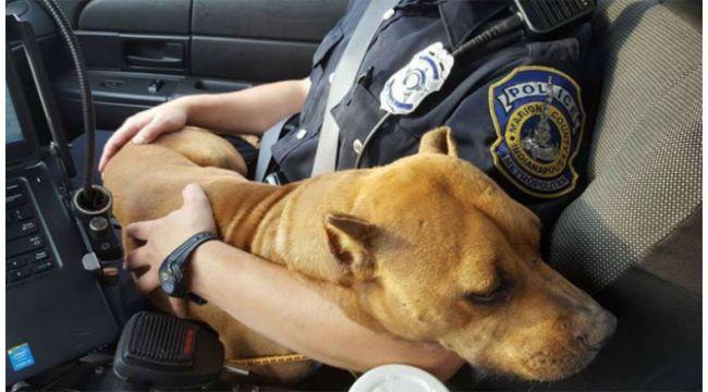 Hayvan polisi geliyor