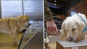 İtalya'da mutasyonlu virüsü köpekler tespit ediyor