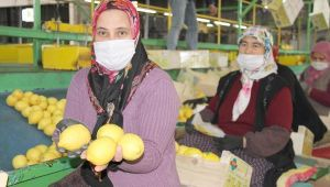 Talep azaldı, limon fiyatları düştü; 3 liradan alıcı buluyor